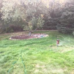 Regrowing Grass